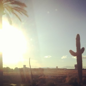 a-christmas-like-none-before-a-cactus-in-arizona