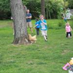 chasing-chickens